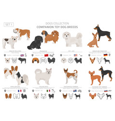 Companion and miniature toy dogs collection vector