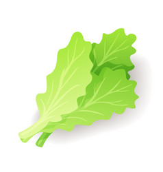 Fresh green salad leaf icon isolated organic vector