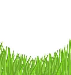 Green grass on a white background garden vector image