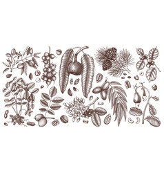 hand drawn nut trees and plants botanical vector image
