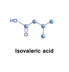 Methylbutanoic isovaleric acid vector