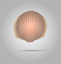 scallop seashell scallops shell isolated on gray vector image