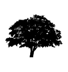 silhouette detached tree with leaves on a white vector image vector image