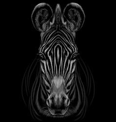 hand-drawn black and white portrait a zebra vector image
