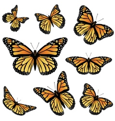 Orange Monarch Butterfly vector