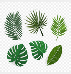 Palm leaves clip art vector