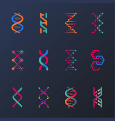 set of isolated dna helix or spirals cell vector image