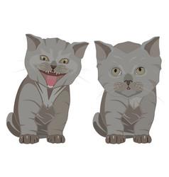 British shorthair breed kittens flat vector