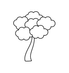 Outlined tree sakura japanese vector