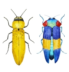 Watercolor bug beetle vector