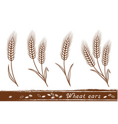wheat ears set vector image