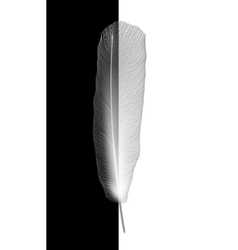 White bird feather on gray background vector image