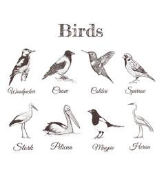 Birds set sketch collection of birds vector