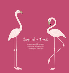 tropical bird flamingos vector image
