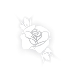 White rose silhouette with shadows on white vector image
