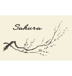 Sketch branch sakura flowers vector image