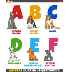 cartoon alphabet collection with purebred dogs vector image