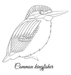 Common kingfisher cartoon bird coloring vector