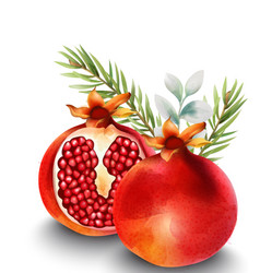 natural red half sliced pomegranate with fir vector image