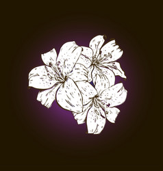 three white lily flowers hand drawn isolated vector image