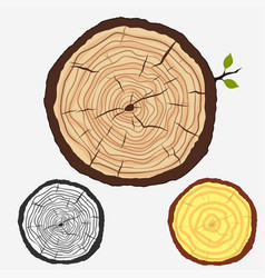 Tree rings cut stump with forest trees vector