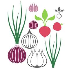 Vegetable Garlic Onion Radish vector image