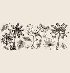 vintage tropical elements composition vector image