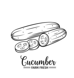 hand drawn cucumber icon vector image vector image