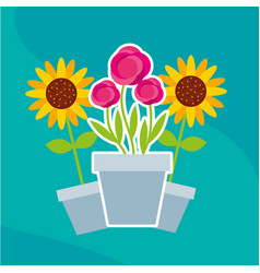 flowers roses and sunflowers in pot garden vector image