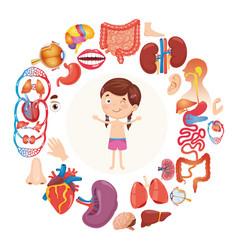 Human organs vector