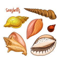 Seashells set or mollusca different forms sea vector