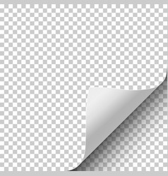 Sheet of transparent paper with curled corner vector
