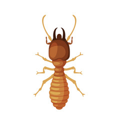 termite harmful insect pest control and vector image