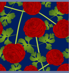 red ranunculus flower on blue background vector image