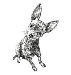 dog russian toy terrier hand drawn vector image