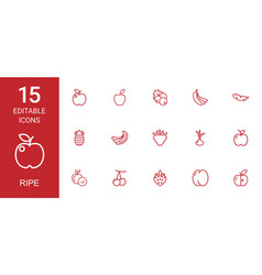 ripe icons vector image