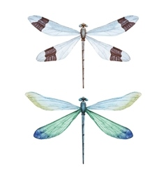 Watercolor dragonflies vector