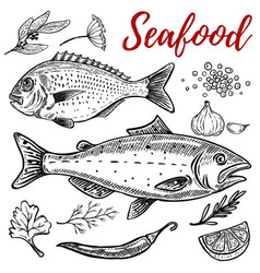 Set of hand drawn seafood isolated on white vector