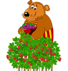 beautiful bear and raspberry vector image vector image