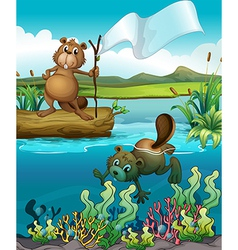 Beavers in river vector image vector image