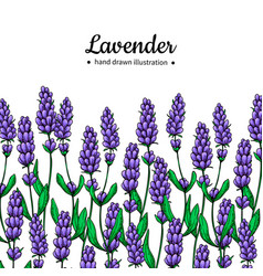 lavender drawing border isolated wild vector image vector image
