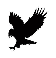 hunting eagle silhouette bird animal feather vector image