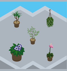 Isometric plant set of blossom fern flowerpot vector