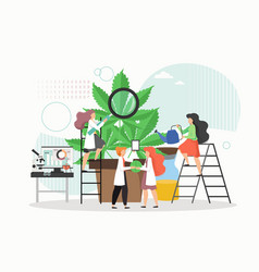 medical cannabis or marijuana research people in vector image