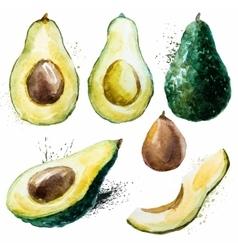 Watercolor avocado set vector