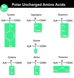 Amino acids with marked radicals polar uncharged vector image
