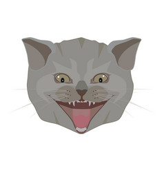 British shorthair cat breed head flat vector
