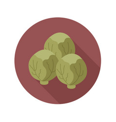 Brussels sprouts flat icon vegetable vector