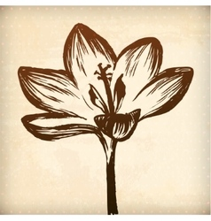 Crocus flower floral hand drawn graphic vector image