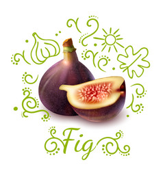 Fig exotic fruit doodles composition vector